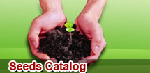 Hot products in Seeds Catalog